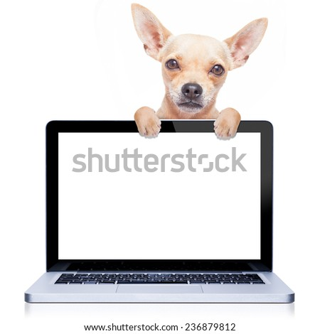 chihuahua dog  behind a laptop pc computer screen, isolated on white background - stock photo