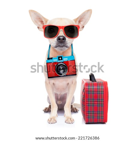 chihuahua dog with photo camera ready for  summer vacation , isolated on white background - stock photo