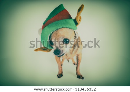chihuahua wearing a santa hat with a toned retro instagram filter and vignette with a shallow depth of field