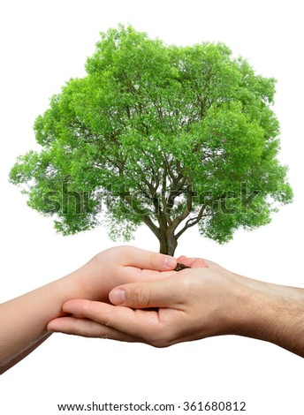Child and male hands holding a tree isolated on white background - stock photo