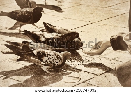 Child feeding grains to pigeons doves birds vintage retro old - stock photo