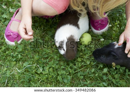Child Girl relaxing and playing with her guinea pigs outside on green ...