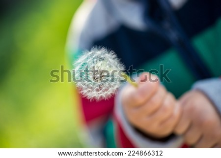 Child holding a dandelion clock or seed head in his hands outdoors in the garden with focus to the dandelion. - stock photo