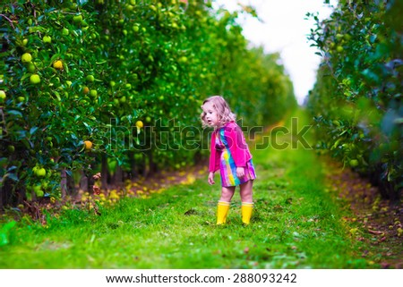 Child picking apples on a farm. Little girl playing in an apple tree orchard. Kids pick ripe fruit in autumn. Fall harvest time. Country outdoor fun for family with children. Toddler kid eating fruits - stock photo