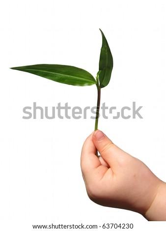 Child's hand holding Seedling - stock photo