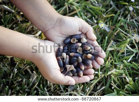 Child's hands full of acorn - stock photo
