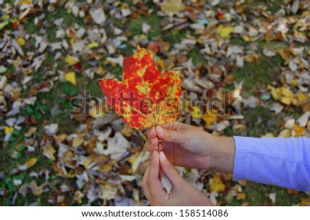 Child's hands holding colorful fall leaf - stock photo