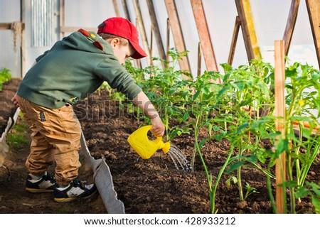 Child watering the garden - stock photo