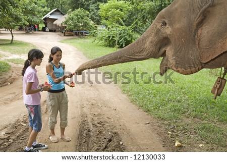 Children feed elephant