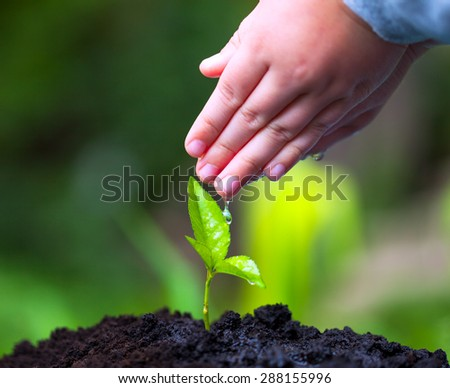 Children hand watering young tree over green background. Macro image. - stock photo