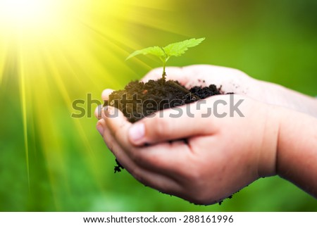 Children hands holding a green young plant and sunlight. Selective focus. - stock photo