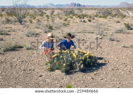Children in cowboy hats in the United States National Park Big Bend sitting in front of blooming  Tulip prickly pear (Opuntia phaeacantha) - stock photo