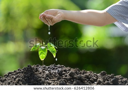 Children's hand watering a young plant