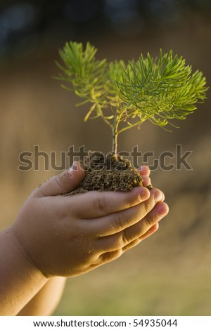 Children's hands holding small plant growing from soil - stock photo