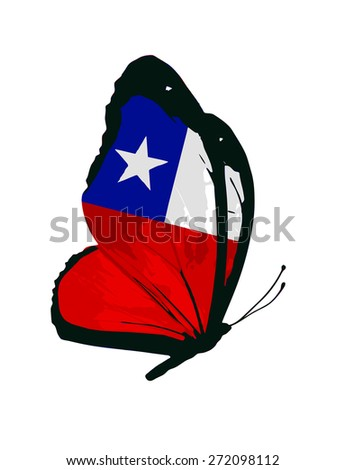 Chile flag butterfly