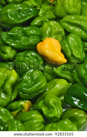 chile habanero,  the real hot chilli peppers from mexico, photo by michelepautasso