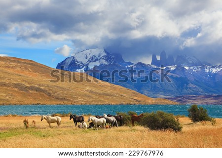 Chilean Andes. Fabulous lake Laguna Azul. Distance are seen three rocks Torres del Paine.  On the lake herd of horses grazing - stock photo