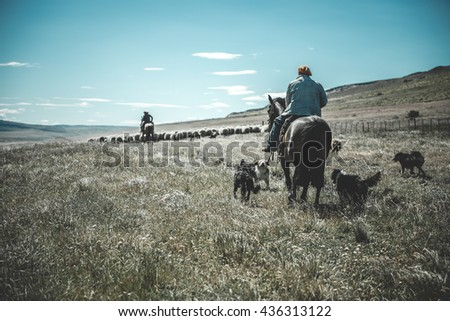 Chilean gaucho herding sheep at Patagonia - stock photo