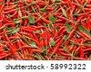 chili - stock photo