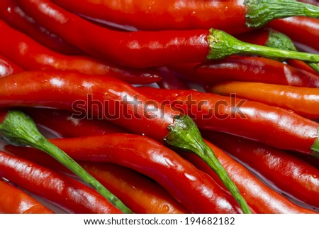 chili pepper - stock photo
