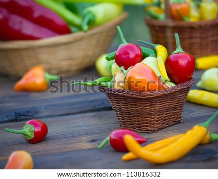 Chili peppers - stock photo