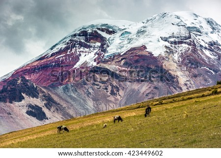 Chimborazo vulcano in Ecuador - stock photo