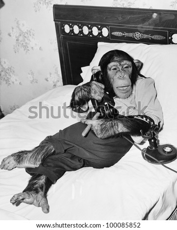 Chimpanzee sitting in bed on the telephone and smoking a cigar - stock photo