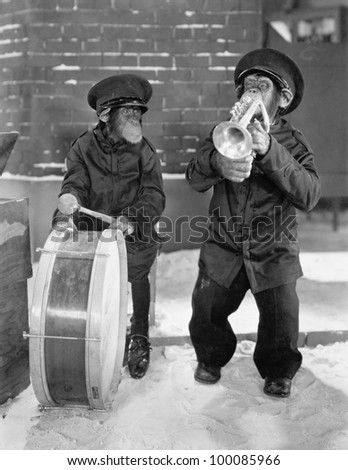 Chimpanzees playing music - stock photo