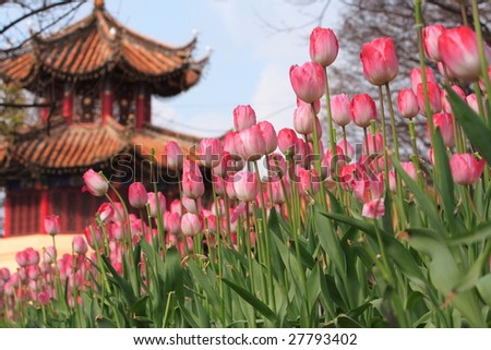 China construction and tulip,yunnan,kunming - stock photo