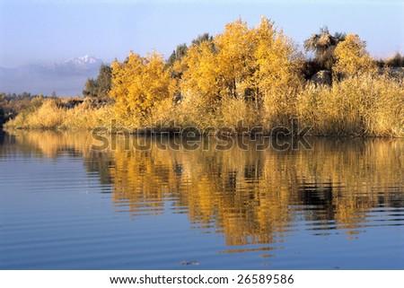 China/xinjiang hiking: Populus euphratica grove at Kezijiaer lake - stock photo