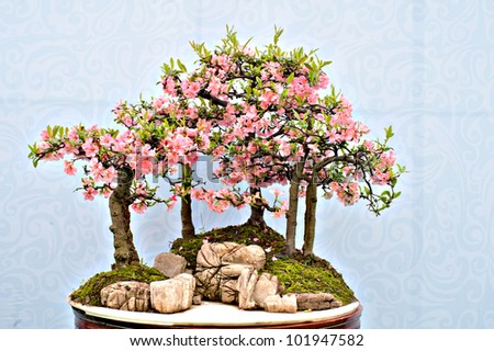 chinese  bonsai at the garden show. - stock photo