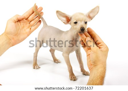 Doggy-style Stock Photos, Illustrations, and Vector Art