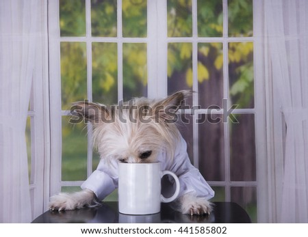 Chinese Crested drinking her morning coffee