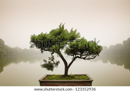 Chinese green bonsai tree - stock photo