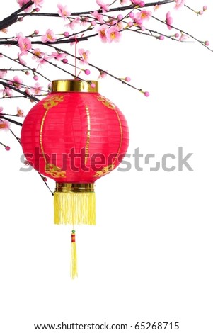 Chinese Lantern on Plum Branch,Isolated on White.