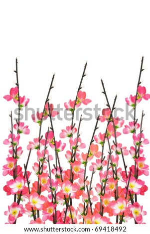 Chinese New Year cherry blossoms on white background - stock photo