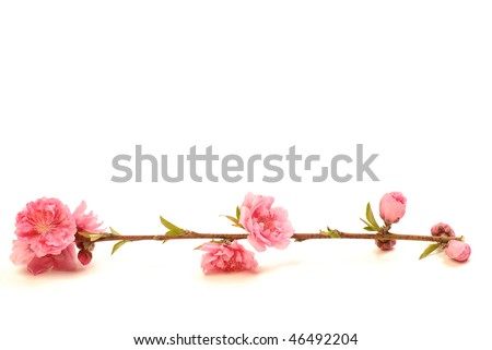 Chinese new year flower - stock photo