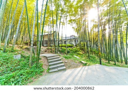Chinese-style house in the bright bamboo forest - stock photo