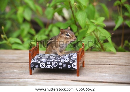 chipmunk climbing into bed on a summer day - stock photo