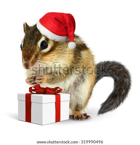 Chipmunk in red Santa Claus hat with gift box on white background - stock photo