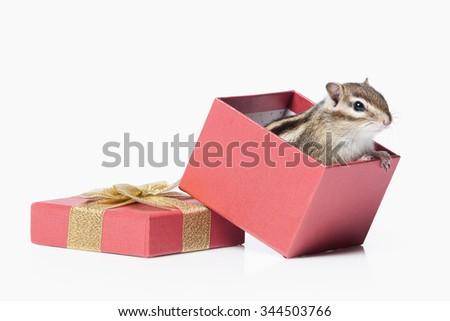 Chipmunk isolated on white background - stock photo