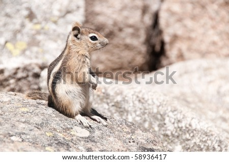 Chipmunk on the Alberta Falls Trail in Rocky Mountain National Park