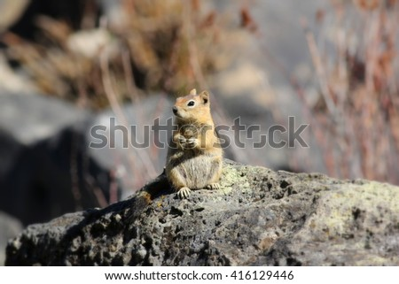 Chipmunk sitting up on a rock - stock photo
