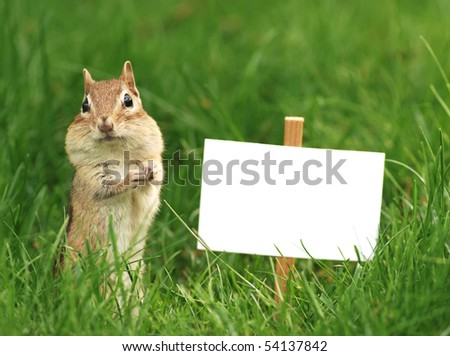 chipmunk with blank sign - stock photo