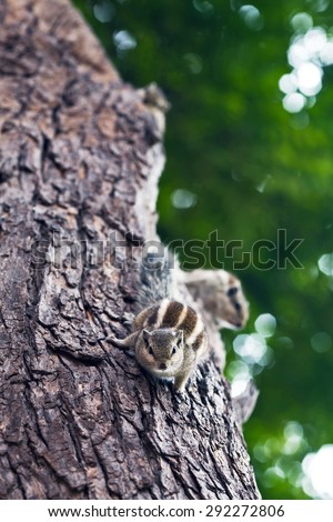Chipmunks on the tree on blurred background - stock photo