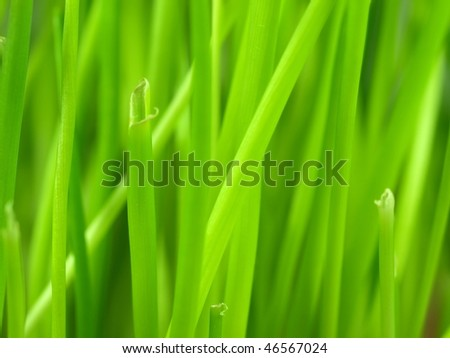 Chive background - stock photo