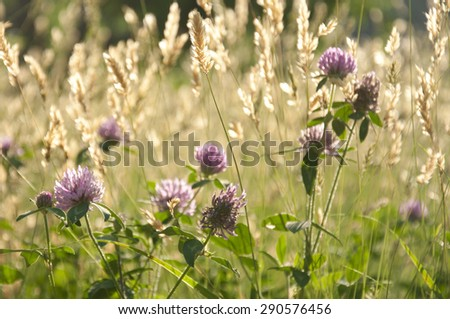 Chives and Wheat Fields - stock photo