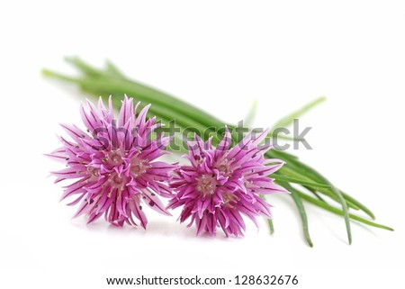 Chives with flowers isolated on white background - stock photo