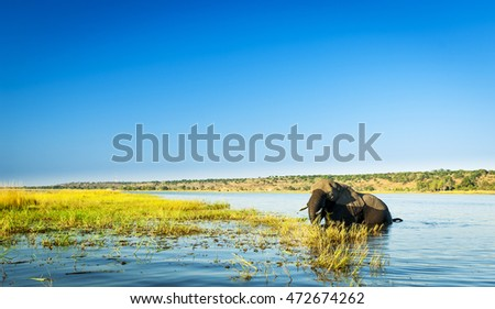 Chobe National Park in Botswana, Africa is home to thousands of Elephants
