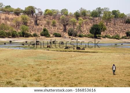 Chobe River, Chobe National Park, Botswana, Africa - stock photo